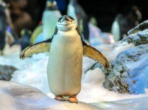Jak narysować pingwina?